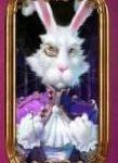 valkoinen kaniini