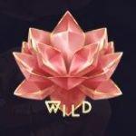 wild divine dreams kolikkopelissä