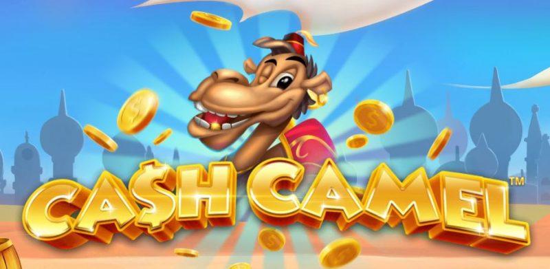 Cash Camel ulkoasu
